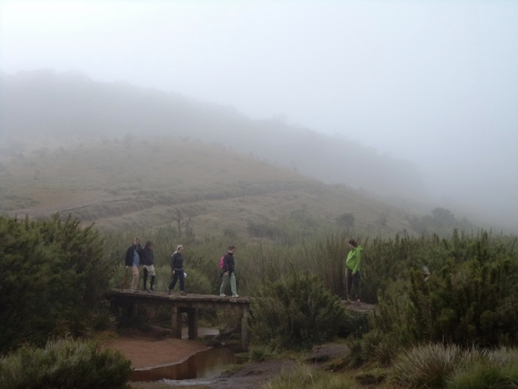 trail-across-horton-plains